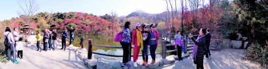 济南:南山红叶大都