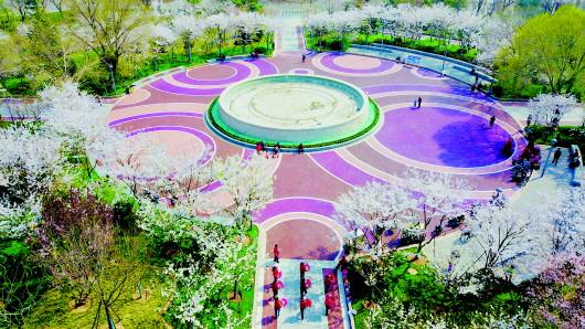 济南天桥区经一路变樱花大道滨湖广场成网红打卡地